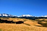 雪山下的金色麦田图片(14张)