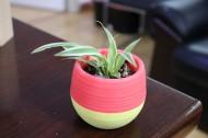 清新绿色小盆栽图片(13张)