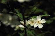 蔷薇花图片(10张)