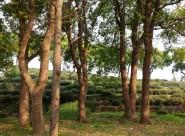 阳光下的树木图片(11张)