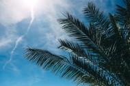 阳光下的棕榈树图片(11张)