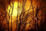 傍晚大树剪影景色图片(8张)