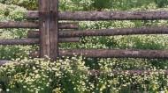 美丽的栅栏图片(29张)