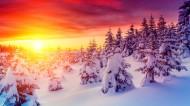 唯美雪景图片(10张)