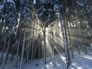 太阳光穿过树林图片(11张)