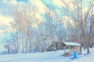 郊外的美丽雪景图片(10张)
