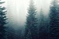 迷雾森林图片(5张)