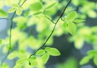 绿色养眼大自然图片(31张)