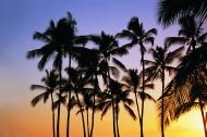 热带椰树绝美风景图片(19张)