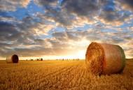 丰收的麦田图片(9张)