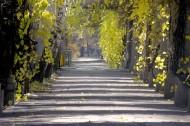 秋季马路图片(19张)