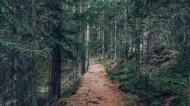 森林里幽静的小路图片(13张)