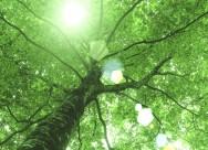参天大树和阳光图片(25张)