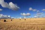 田野里的干草垛图片(10张)