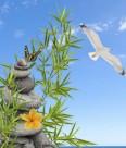 鹅卵石竹子景色图片(19张)