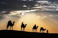 荒漠骆驼人物行走图片(10张)