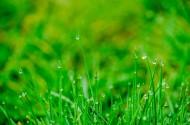雨后的草丛图片(10张)