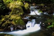 清澈的溪流图片(6张)