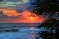 海岛椰树自然风景图片(15张)