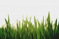 绿色的草地图片(13张)