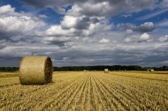 秋收的麦田风景图片(19张)