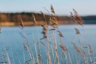 湖边的风景图片(12张)