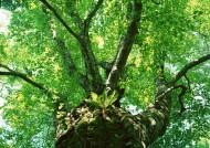 绿色树荫图片(14张)