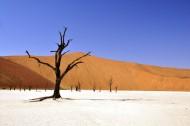 独自生长的一棵树图片(10张)