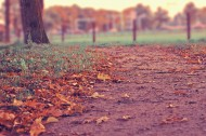 满地秋天落叶图片(15张)