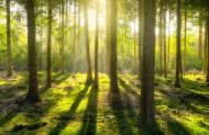 树林森林图片(10张)
