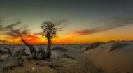 荒凉的沙漠风景图片(5张)