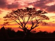 夕阳映照下的一棵树图片(10张)