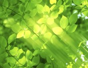 朦胧绿影图片(22张)