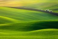 绿色的田野图片(11张)