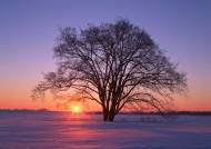 黄昏树木剪影图片(18张)