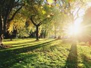 唯美的阳光图片(13张)