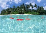 椰树海滨风景图片(32张)