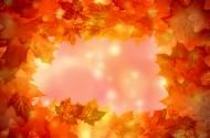 五彩缤纷的枫叶图片(15张)