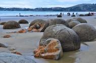 新西兰摩拉基大圆石图片(8张)