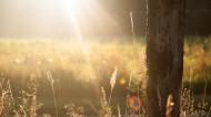 唯美的晨光图片(13张)