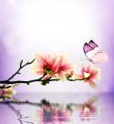 唯美花朵与蝴蝶图片(15张)