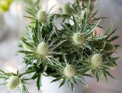 植物清新手捧花 不一样的手捧花