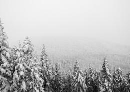 冬季白雪覆盖的森林图片(16张)