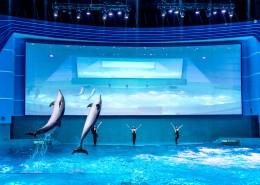 江西南昌万达海洋乐园内景图片(10张)