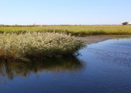 内蒙古呼伦贝尔湖自然风景图片(10张)