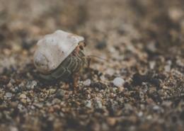 海滩上的寄居蟹图片(10张)