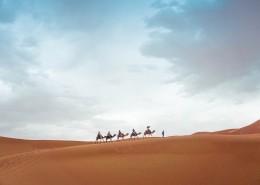 驮着人的骆驼图片(11张)