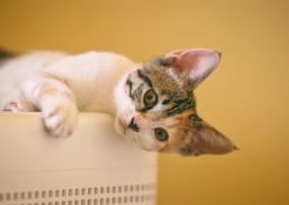 乖巧的猫咪图片(10张)