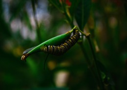 蠕动的毛毛虫图片(12张)