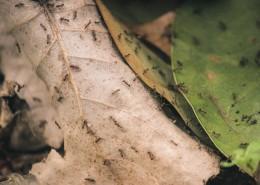 勤劳的蚂蚁图片(13张)